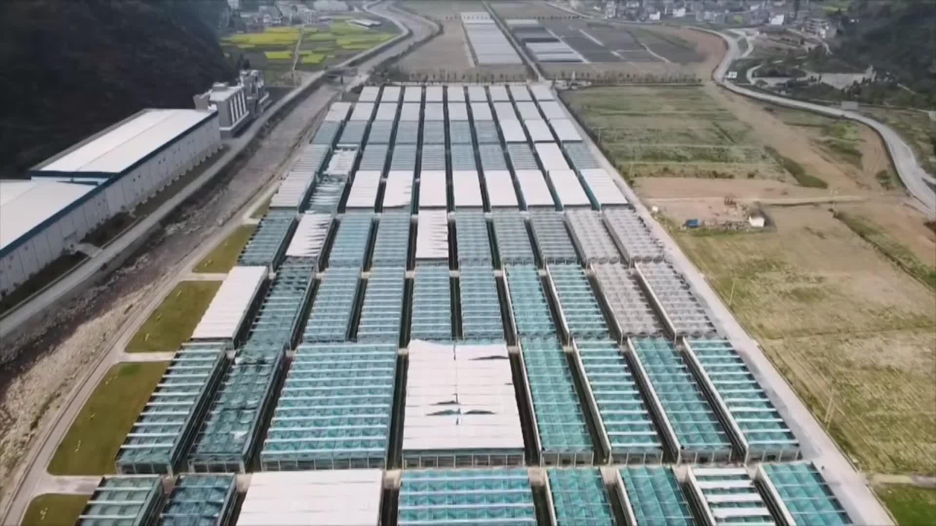 铜仁印江:小小食用菌发挥大大能量